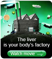 Find out what your liver does